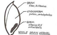 bran_endosperm_germ__228x142